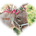 darn good donkeys