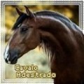 cavalo adestrado