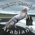 black sands arabian