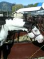 pretty paint ponies