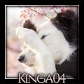 kinga04