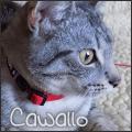 cawallo