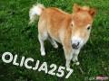 olicja257