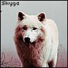skyge