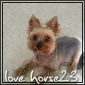 love horse23