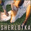 sherlotka