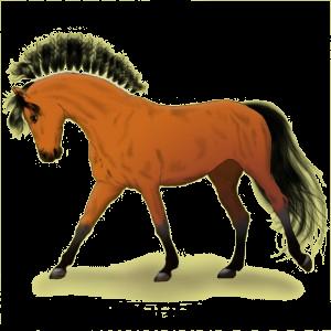 Koń wierzchowy Koń andaluzyjski Ciemnokasztanowata