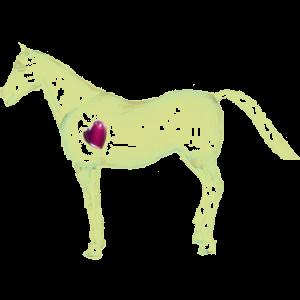 Koń wierzchowy Koń czystej krwi arabskiej Bułana