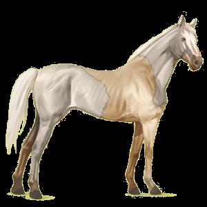 Koń wierzchowy Koń pełnej krwi angielskiej Skarogniada