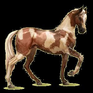 Koń wierzchowy Koń achał-tekiński Jasnokasztanowata