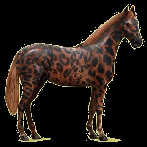 Pegaz wierzchowy Koń hanowerski Siwa Jabłkowita
