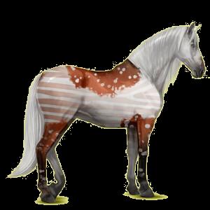 Koń wierzchowy Koń andaluzyjski Izabelowata