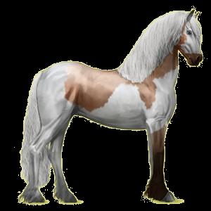 Koń wierzchowy Koń fryzyjski Kara