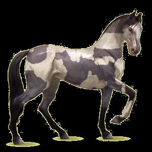 Koń wierzchowy Koń achał-tekiński Bułana