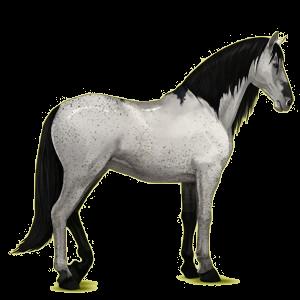 Pegaz wierzchowy Koń andaluzyjski Siwa Jabłkowita