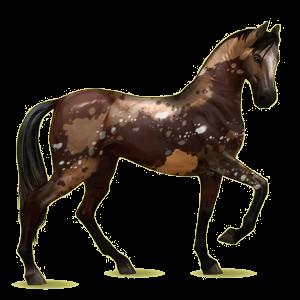 Koń wierzchowy Koń achał-tekiński Kasztanowata