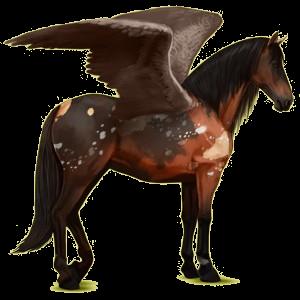 Pegaz wierzchowy Koń andaluzyjski Gniada