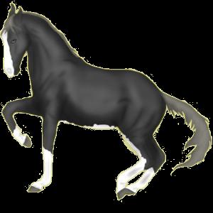 Koń wierzchowy Pinto Ciemnogniada Tobiano