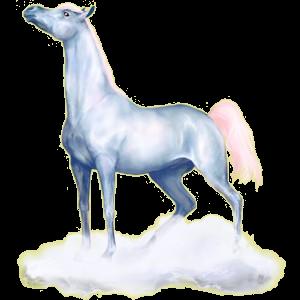 Koń wierzchowy Koń achał-tekiński Cremello