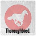 thoroughbred.