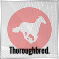 thoroughbred.