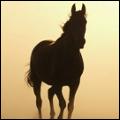 amazing horses andalusian