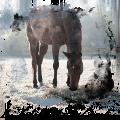 cavallo...
