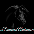 :: diamond arabians ::
