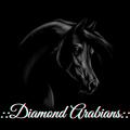 :: diamond arabians ::