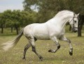 our andalusians