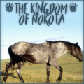 ♛ the kingdom of nokota♛