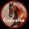 ♕ capoeira ♕