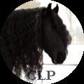 « cavallo le paтaтe »