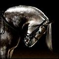 caballos inmortales