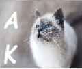 arabskie kotki