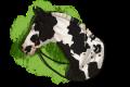 dalarhästar