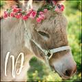 immortals donkeys
