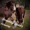 breeding shire's horwse