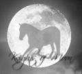 knights of moon