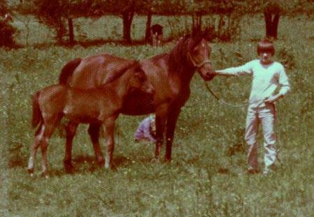 LIL DARLING #89605 (Gaygo x Marhaba Safina) 1972 mare, with 1977 colt Hu-Benzar; at hand with son, Alan.