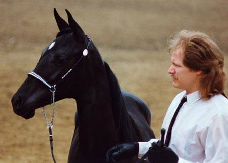 1991 Filly HU-VANESSA #467208 (Zhar-Raskal x Hu-Kotara) with son, Cliff; pictured here as a yearling.
