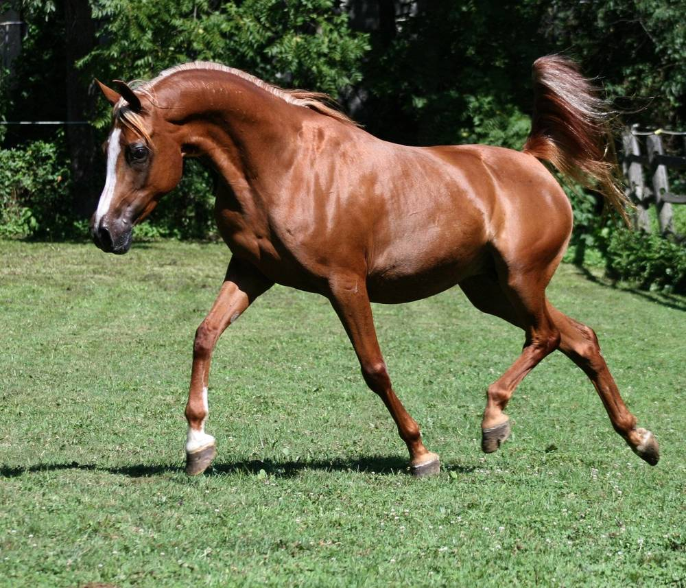 ECHOS SILOUTTE