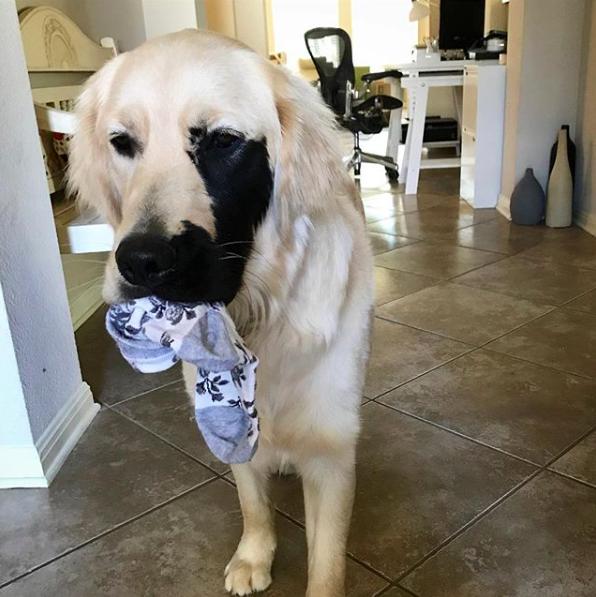 enzo stealing sock
