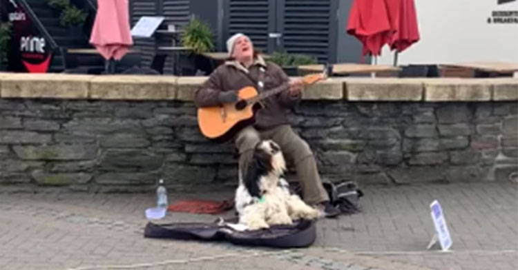 singing sheepdog