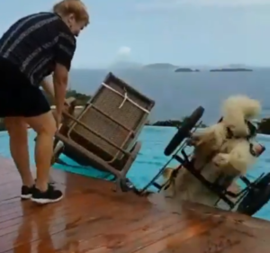lion goes for a swim