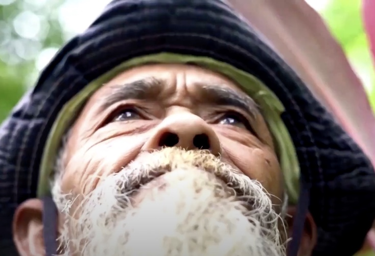 sadiman looking at his banyan forest with pride