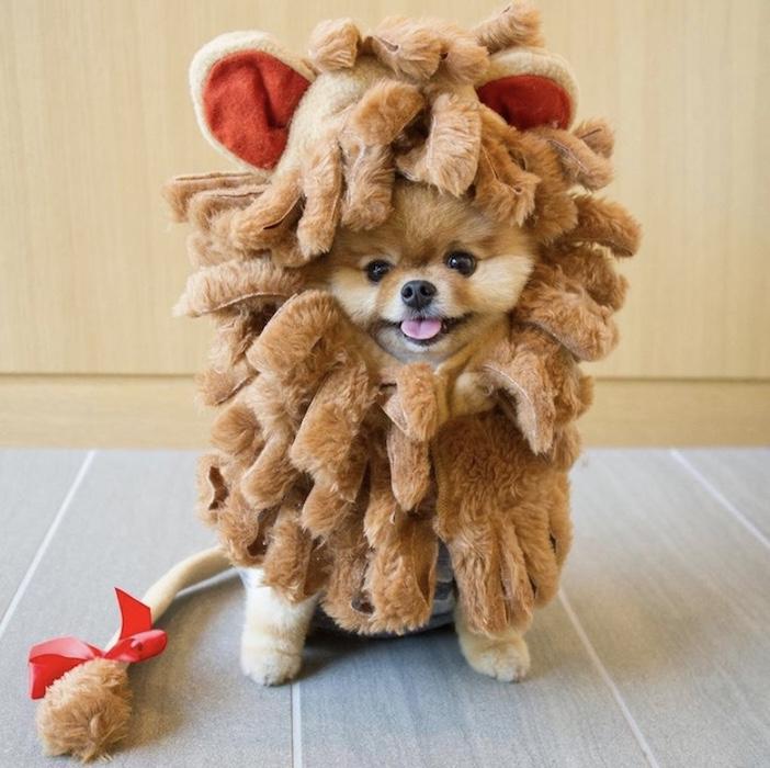 jiff as a lion