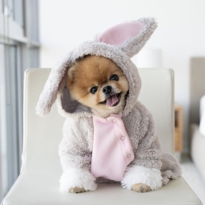 bunny rabbit jiff