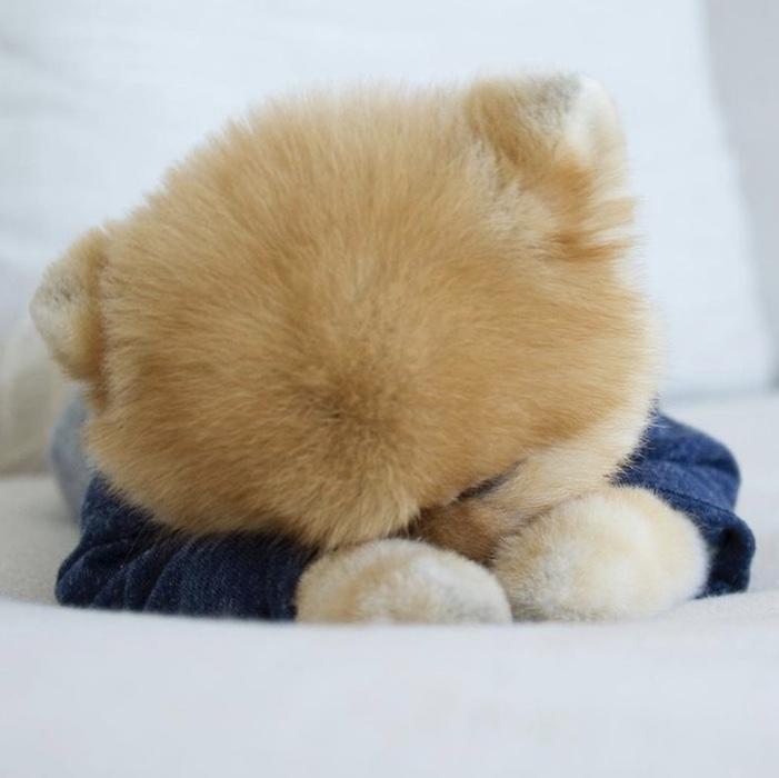 sleeping jiff