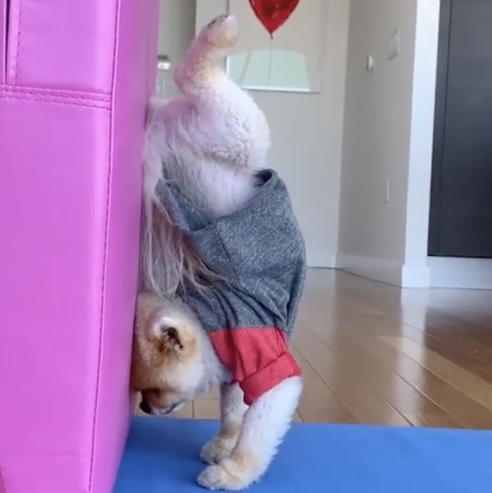 jiff in a handstand